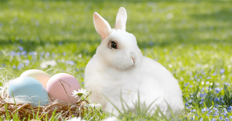 Easter egg hunts in metro vancouver 2018 healthy family expo negle Choice Image