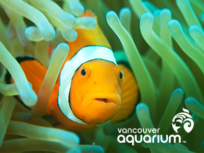 Vancouver Aquarium Birthday Parties Healthy Family Expo